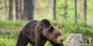 does bear spray work