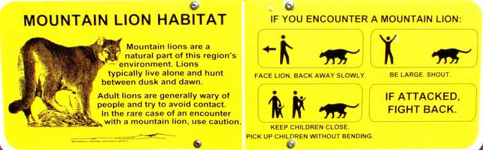 what to do if you see a mountain lion